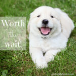 worth the wait {puppy 101}