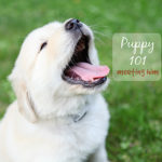 meeting our puppy {puppy 101}