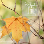 Photography Friday {fall}