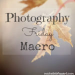 Macro {photography friday}