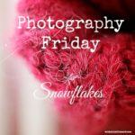 snowflakes so tiny and miraculous {photography friday}