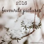 a few pictures from 2016 {photography friday}