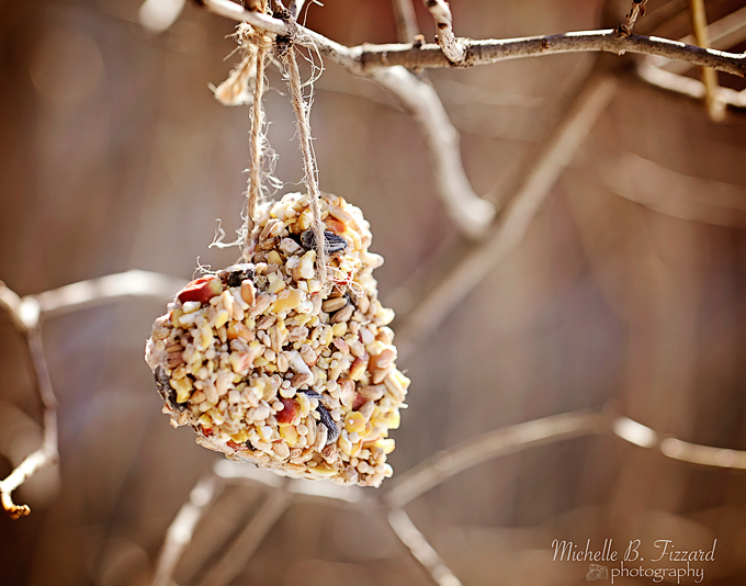 birdseed feeders