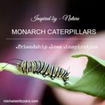 monarch caterpillars and remembering a friend {photography friday}