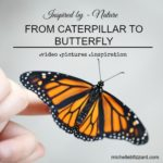 Miraculous Monarch Butterflies (includes video){photography friday}