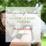 one year of puppy pictures {photography friday}