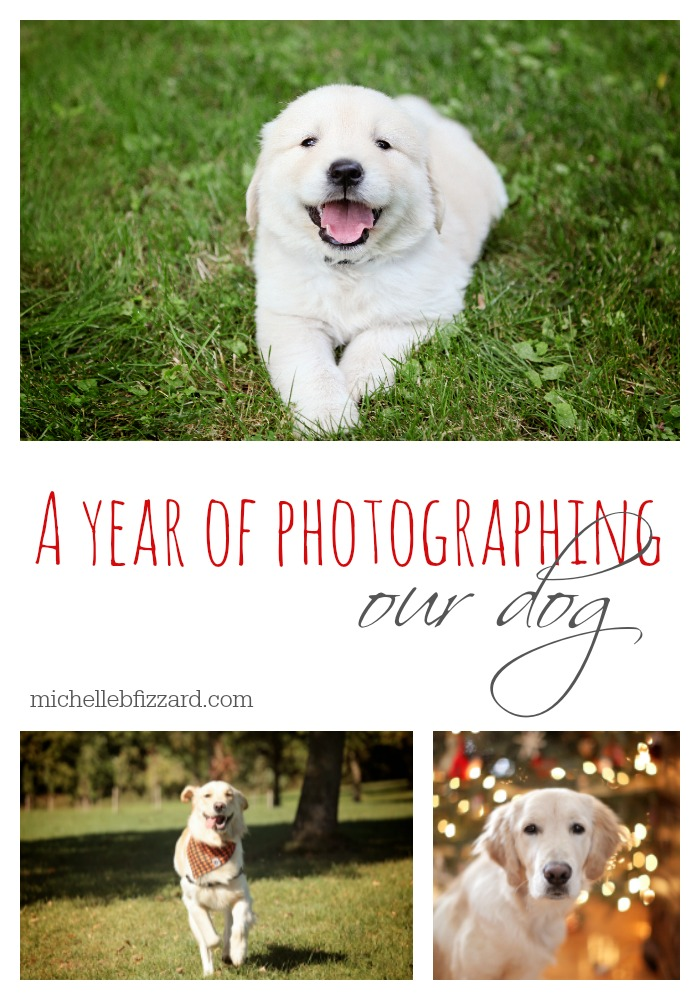 one year of puppy pictures